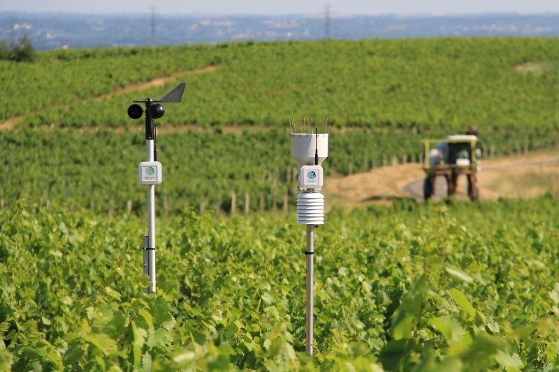 L'anémomètre et le pluviomètre connecté Weenat dans un vignoble.