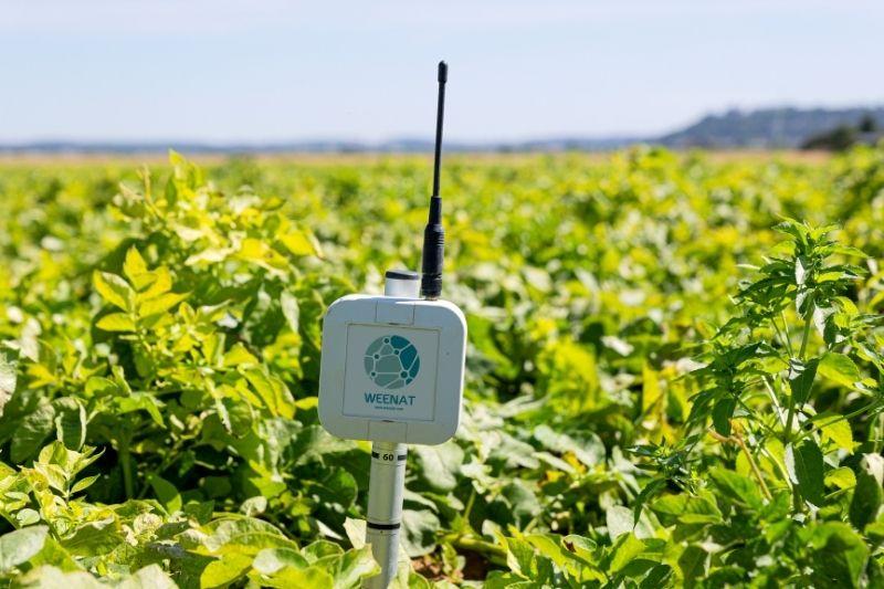 Une sonde tensiométrique pour les professionnels de l'agriculture