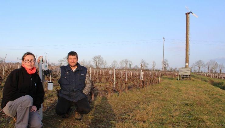 Les viticulteurs utilisent le capteur gel Weenat.
