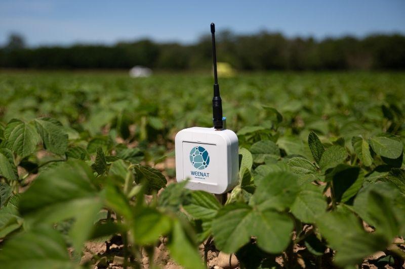 Les sondes tensiométriques Weenat facilitent le pilotage de l'irrigation.