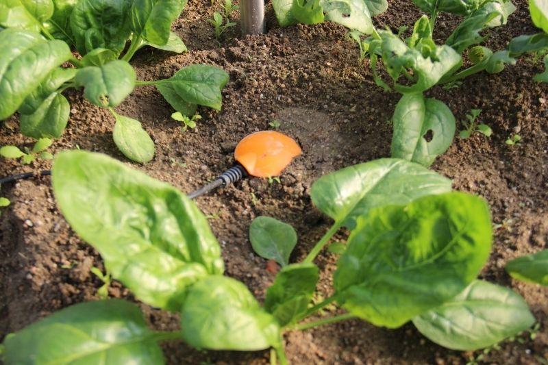 La sonde capacitive Weenat aide les agriculteurs à piloter leur irrigation