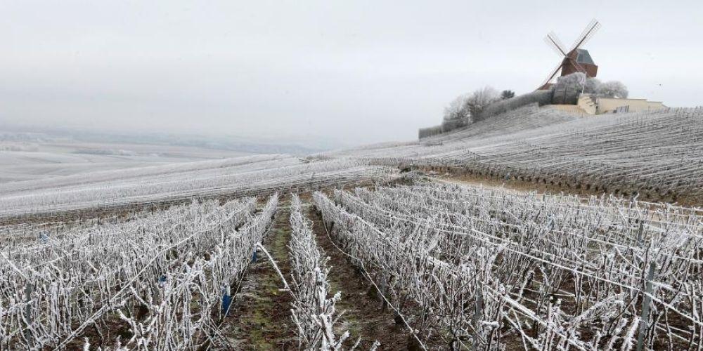 Une gelée blanche dans la vigne