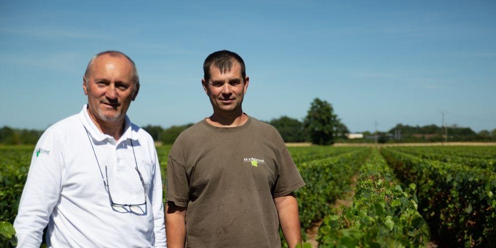 L'OAD Mileos permet de lutter contre le mildiou sur pomme de terre