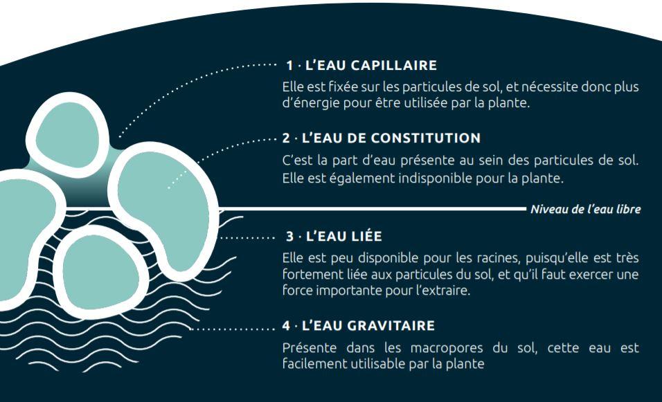 Les différents types d'eau présents dans le sol